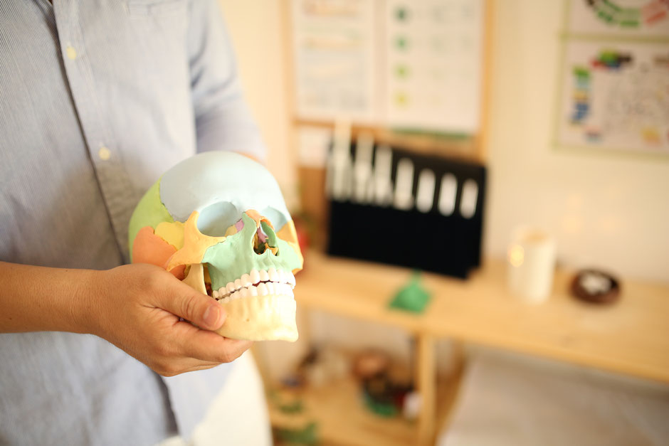 頭蓋調律,頭蓋骨,矯正,セミナー