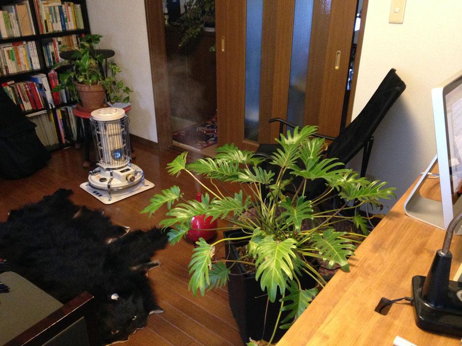 植物、暖房、加湿器のある室内