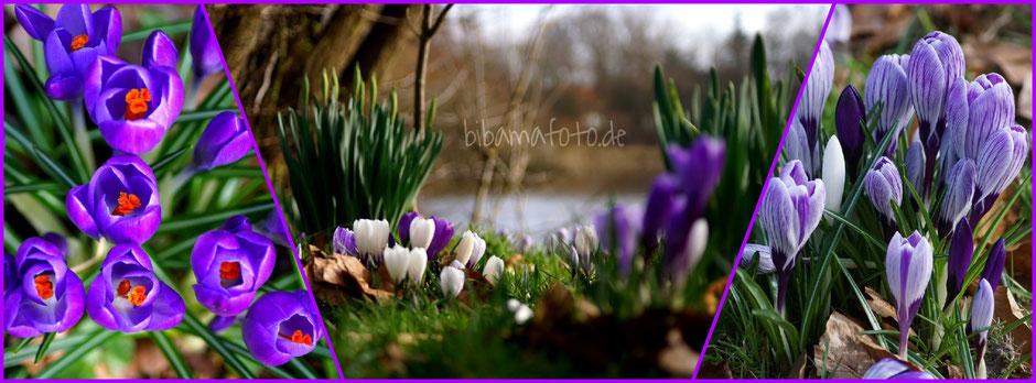 Frühling hält Einzug ... :)