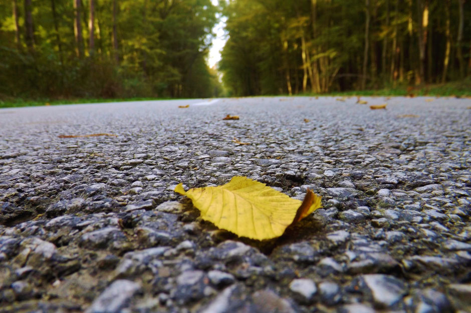 A lonely leaf in the road in the forest