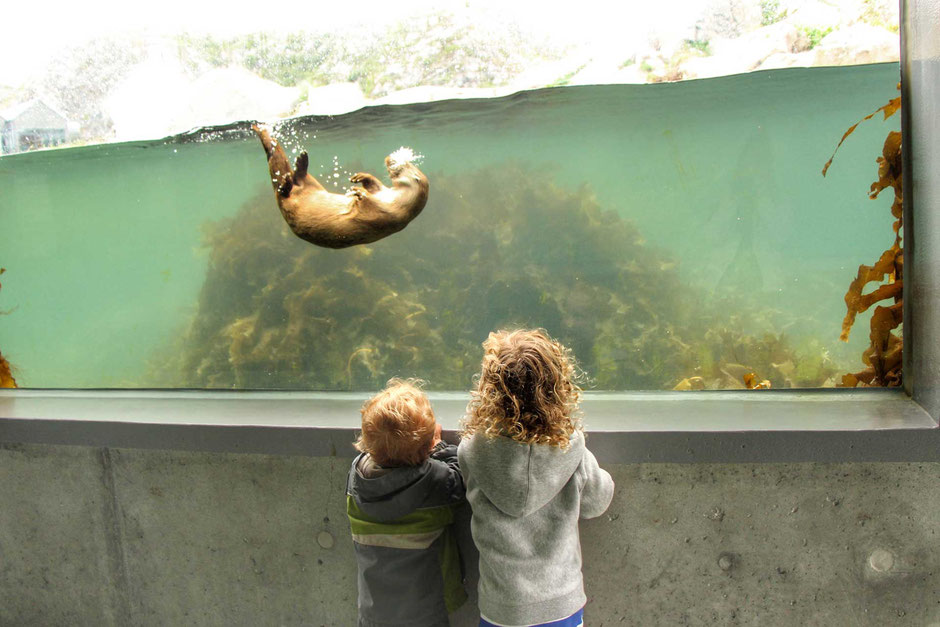 Otters at Alesund Aquarium in Norway with Kids