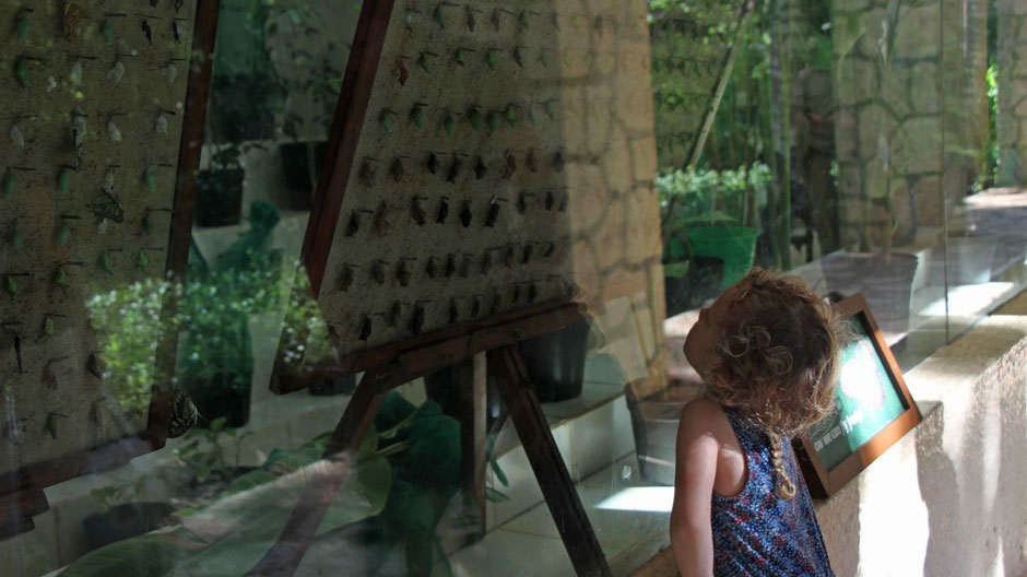Xcaret with Toddlers - Butterfly Pavilion
