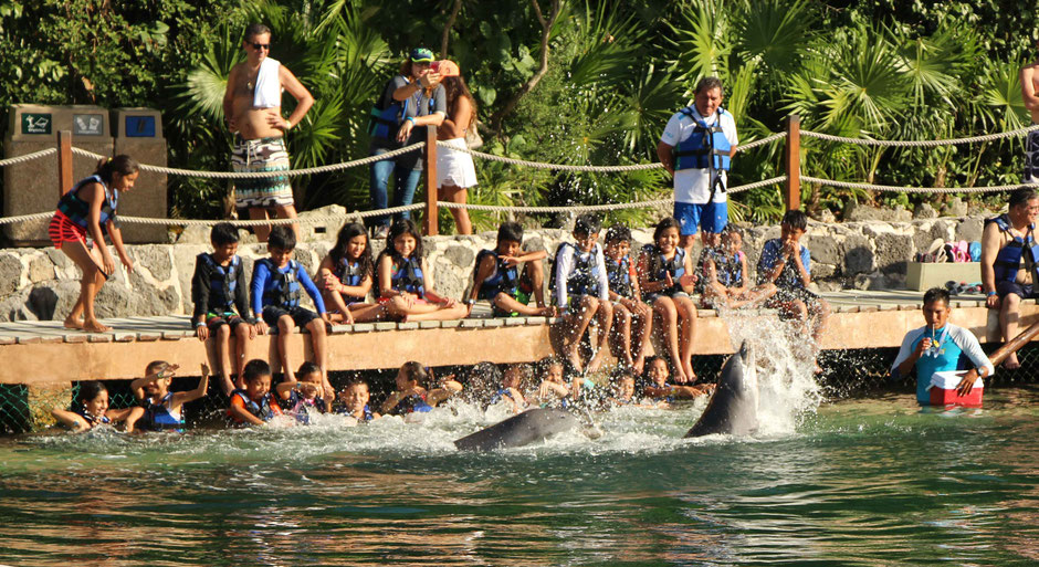 6 Awesome Eco-Adventure Parks in the Mayan Riviera - Xel-ha - Dolphin Encounter