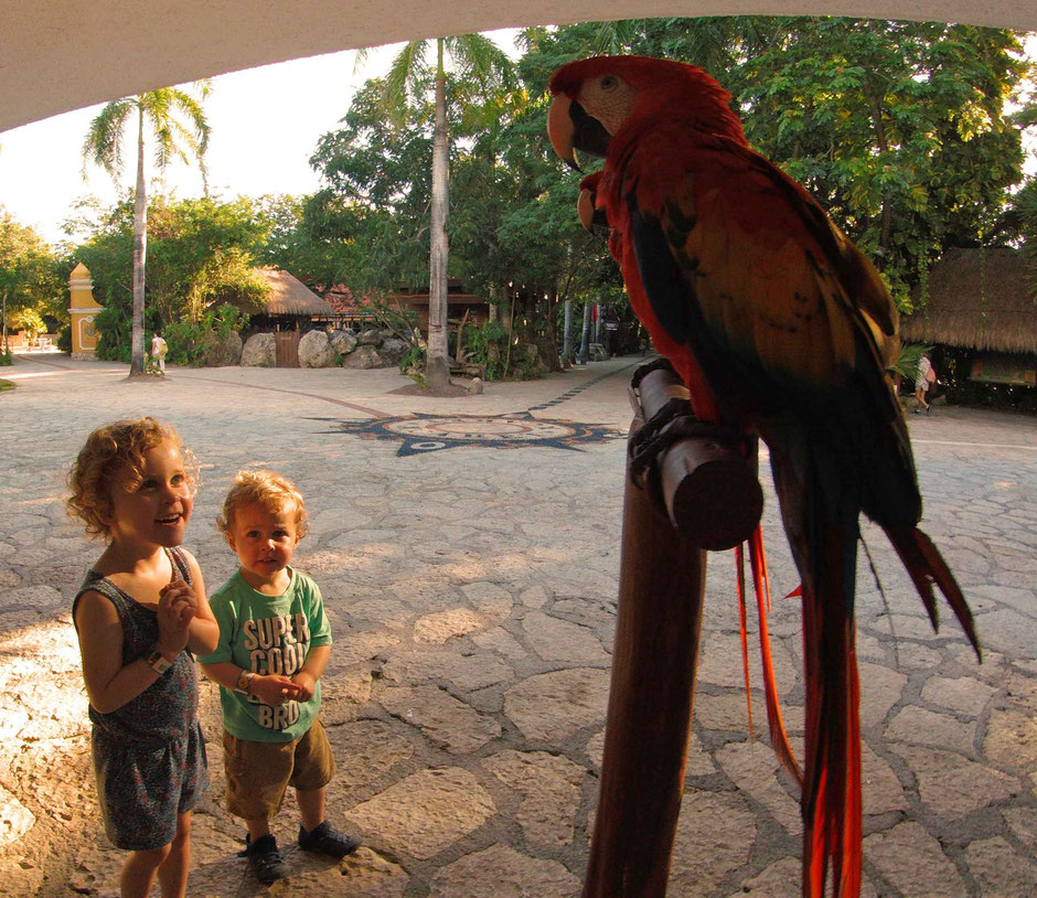 Xcaret with Toddlers - Parrots everywhere!