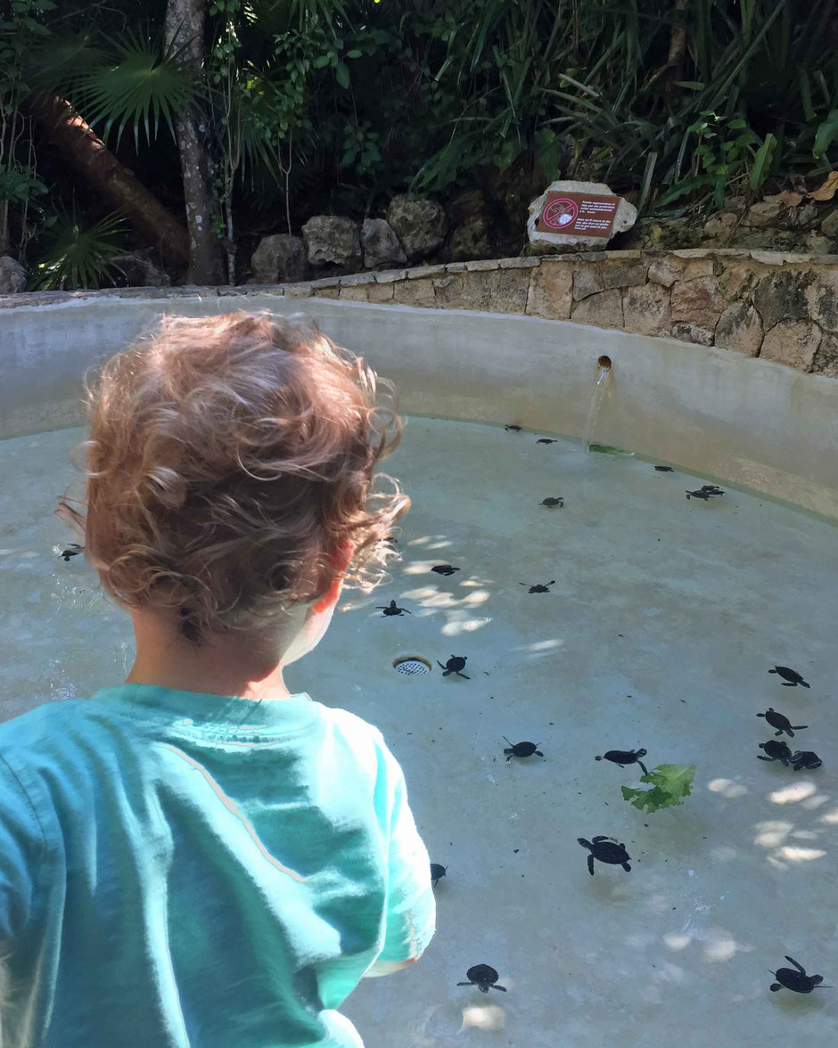 Xcaret with Toddlers - Sea Turtles