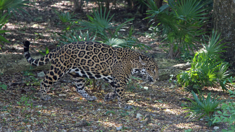 Xcaret with Toddlers - Jaguar