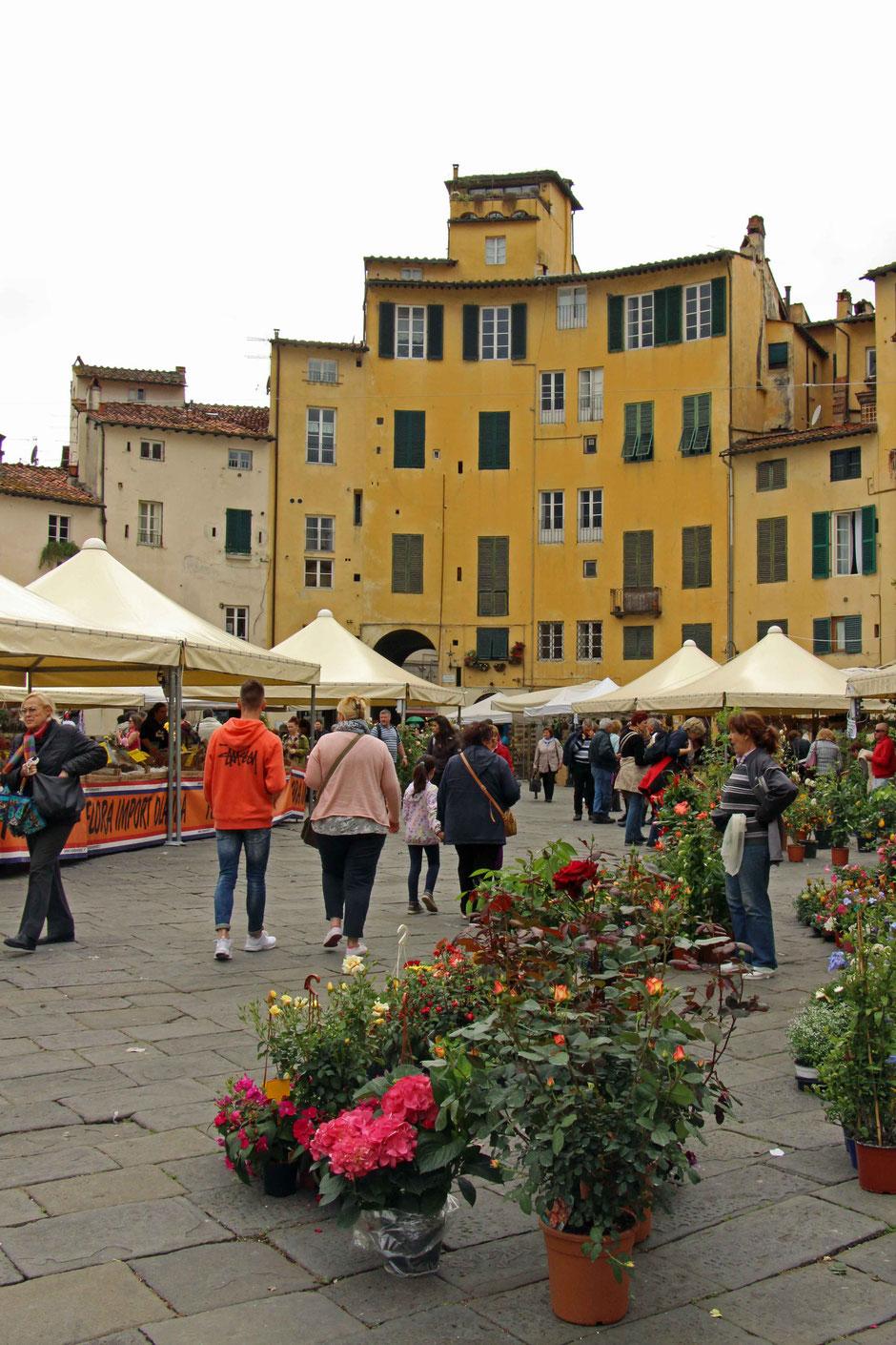 Piazza dell'Anfiteatro Lucca Italy