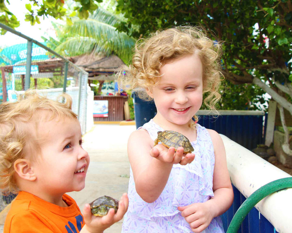 A Day of Exciting Family Fun on Isla Mujeres - Holding Baby Turtles at Tortugranja Turtle Farm