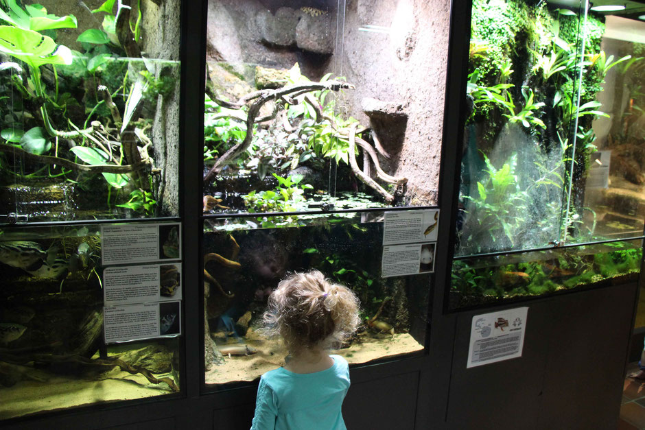 Reptile Park for Kids Oslo Norway