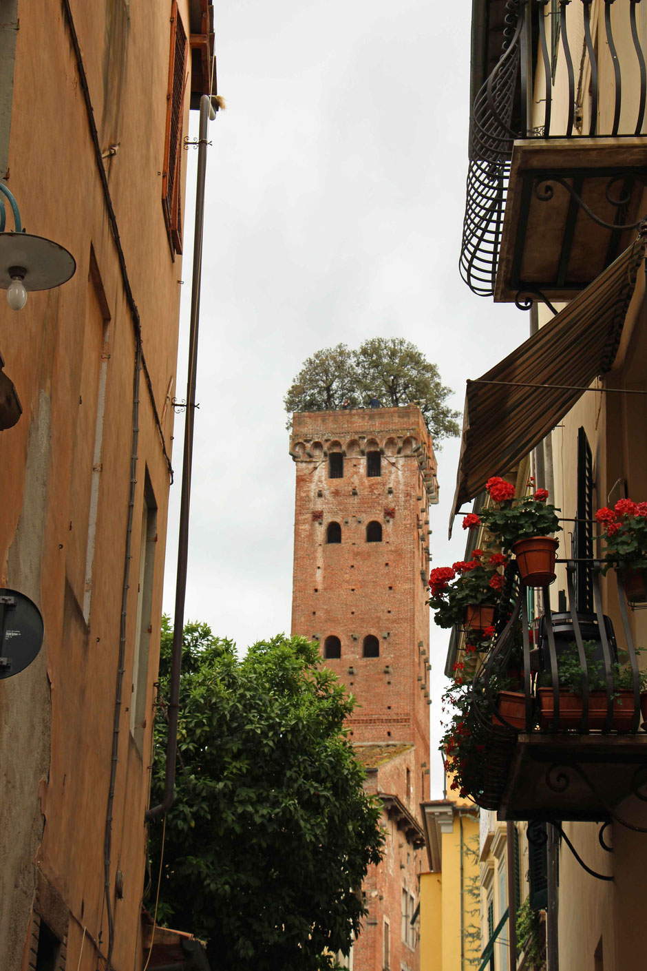 View of Guinigi Tower in Lucca Italy