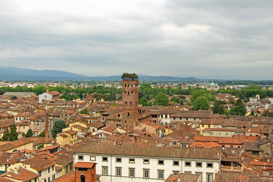 View of Guinigi Tower from Torre della Ore in Lucca Italy