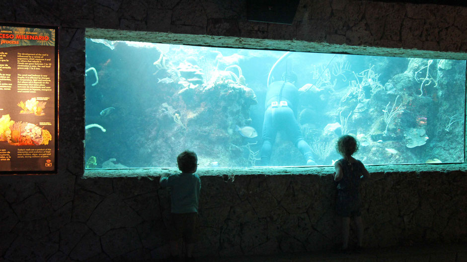 Xcaret with Toddlers - Aquarium