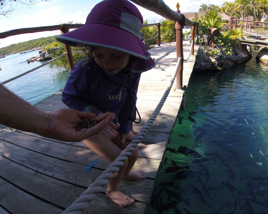 How to Have an Unparalleled Day at Xel-Ha, Mexico - Feeding the Tropical Fish