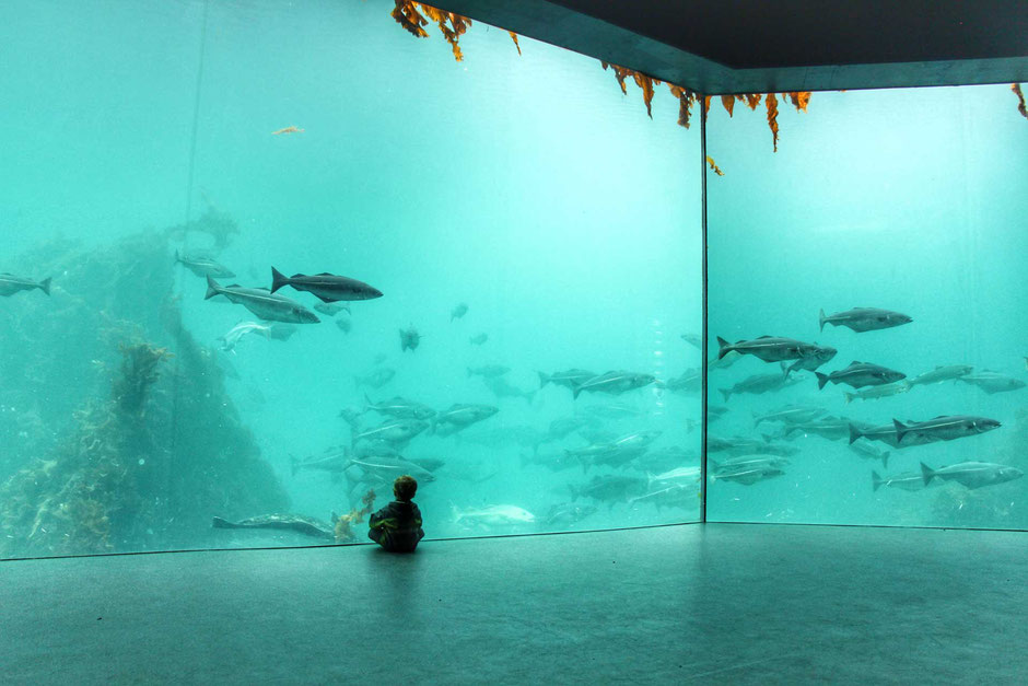 Atlantic Ocean Room at Alesund Aquarium in Norway