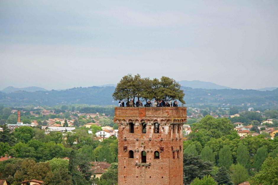 Torre Guinigi in Lucca Italy