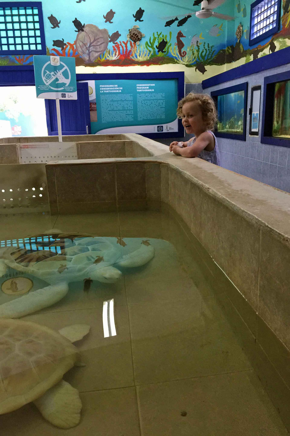 A Day of Exciting Family Fun on Isla Mujeres - Tortugranja Turtle Farm