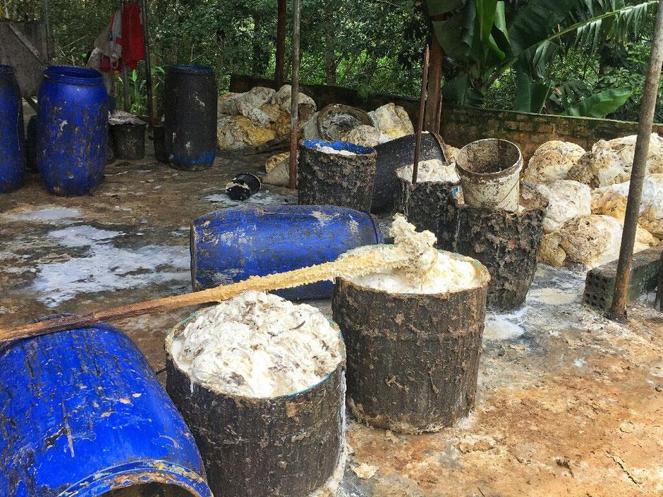 Erkundungstour - zentrales Hochland  - Vietnam – Erkundungstour – Ly und Heiko – Viethouse – Kautschuk - Bäume - Plantage – Umfüllstation - Latexmilch – blaue Fässer