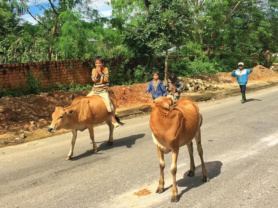 Erkundungstour - zentrales Hochland  - Vietnam – Erkundungstour – Ly und Heiko – Viethouse – Straße – Kinder – Rinder – reiten