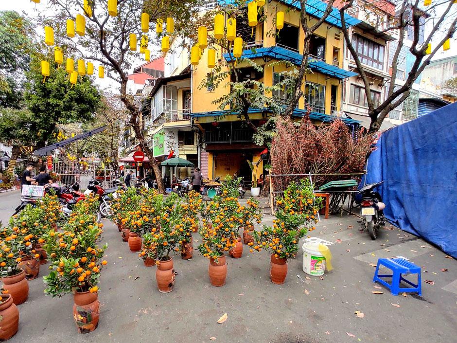 Mandarin-Bäumchen-im-Topf-fuer-TET-Fest-Hang Luoc Street-Hoan Kiem-Hanoi-Vietnam-Urlaub