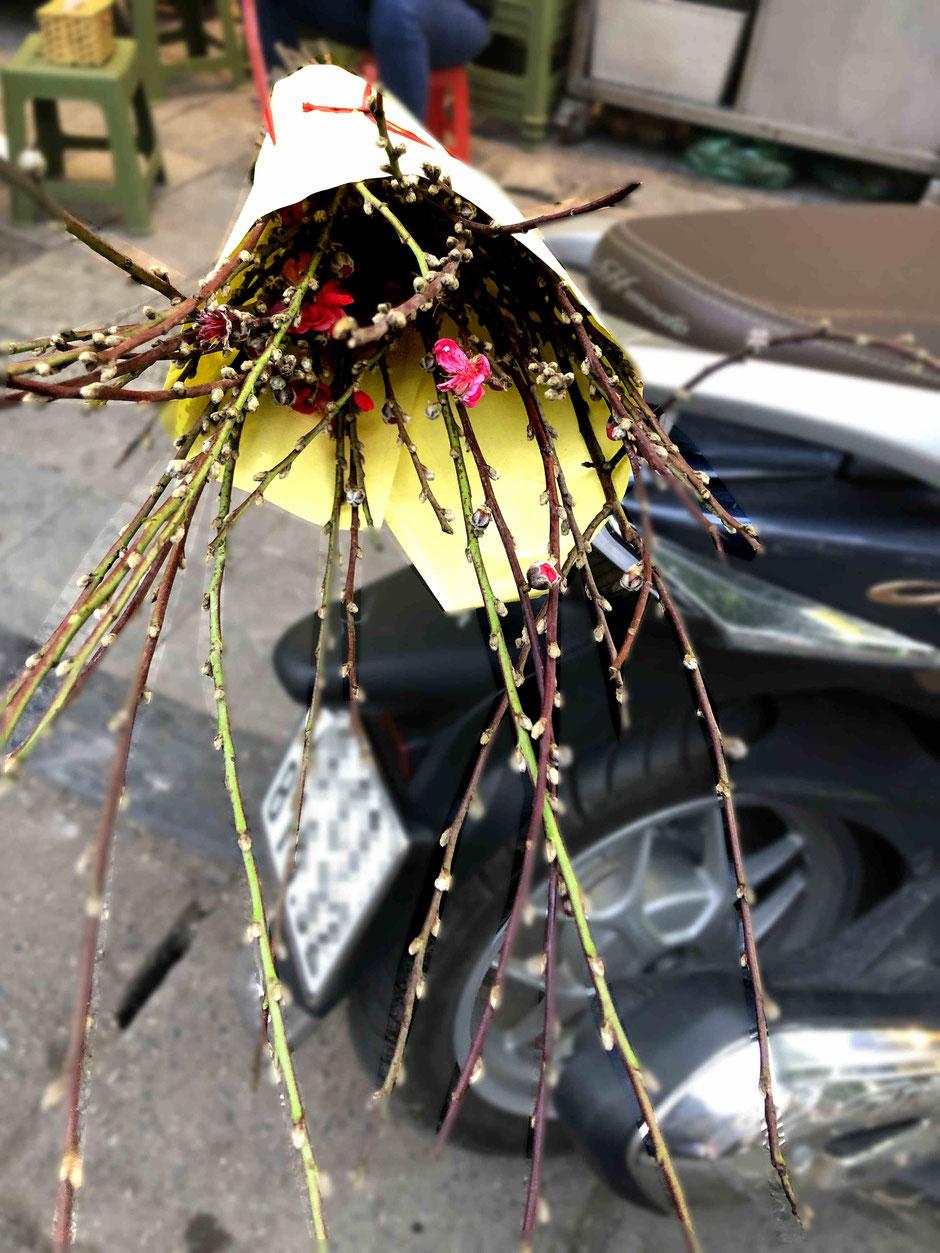 TET-Pfirsich-Zweig-mit- Blüten-Vietnam-2021