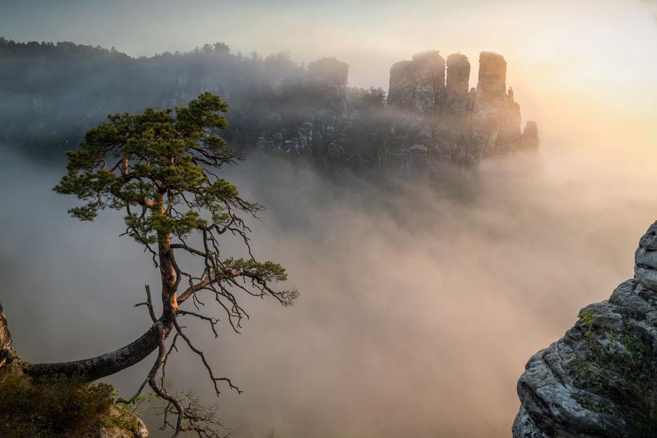 """Gewinnerbild in der Kategorie Frühling des """"Fotowettbewerb Sächsische Schweiz"""" 2019"""