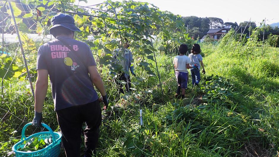 体験農場 農業体験 自然栽培  野菜作り教室 固定種 種取り