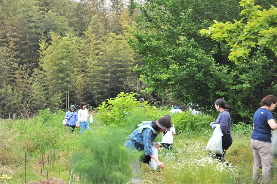 ハーブ収穫体験を神奈川の自然栽培の「すどう農園」で