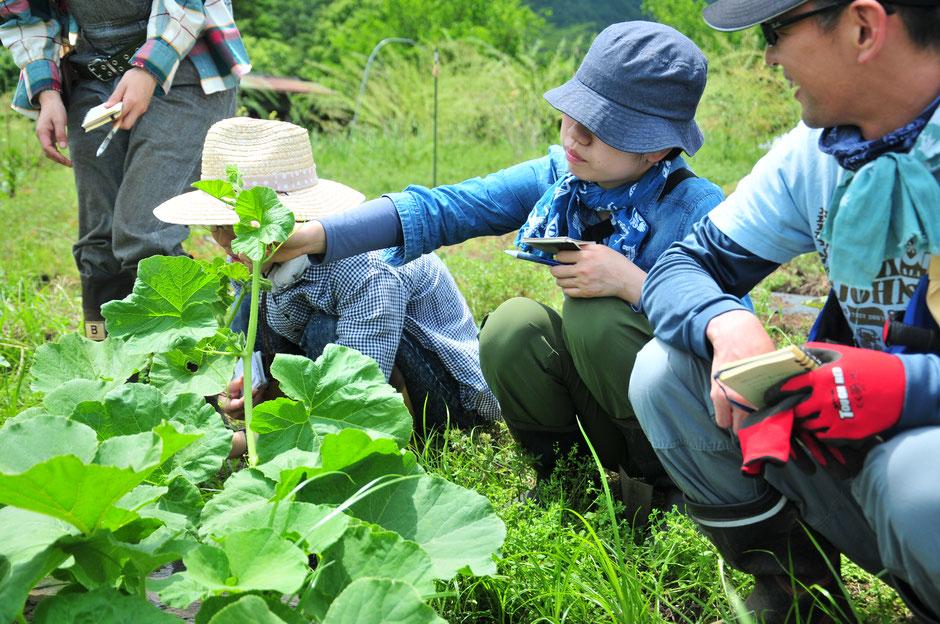 固定種 種取り 野菜作り教室 農業体験 体験農場 自然栽培