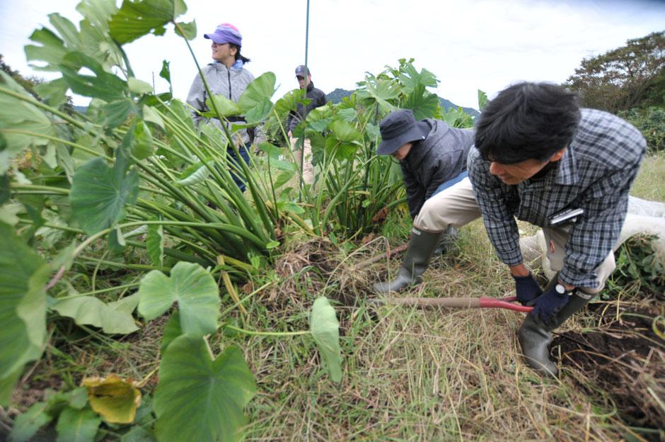 自然栽培 体験農場 農業体験