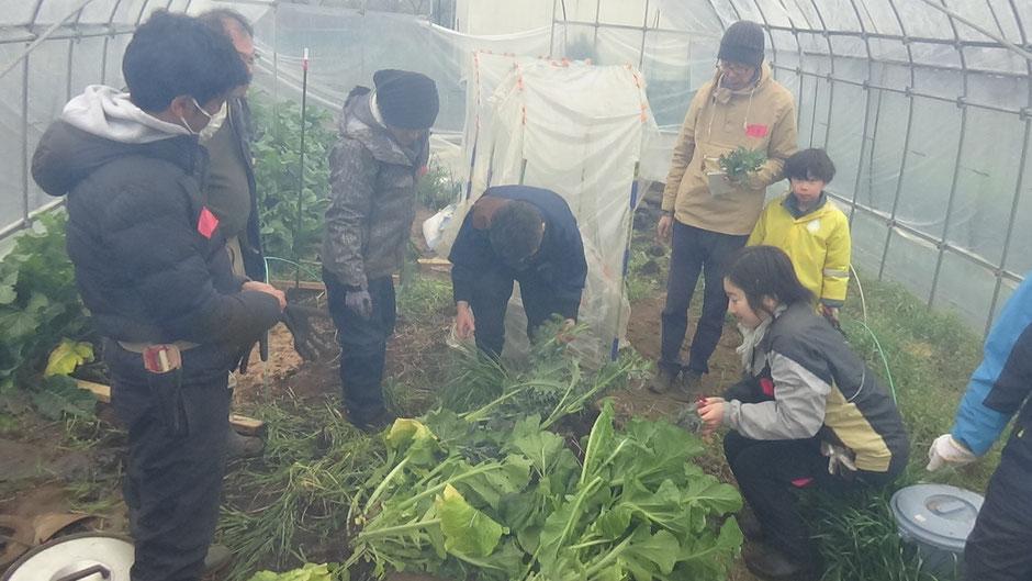無農薬自然栽培の農業体験・首都圏から日帰り
