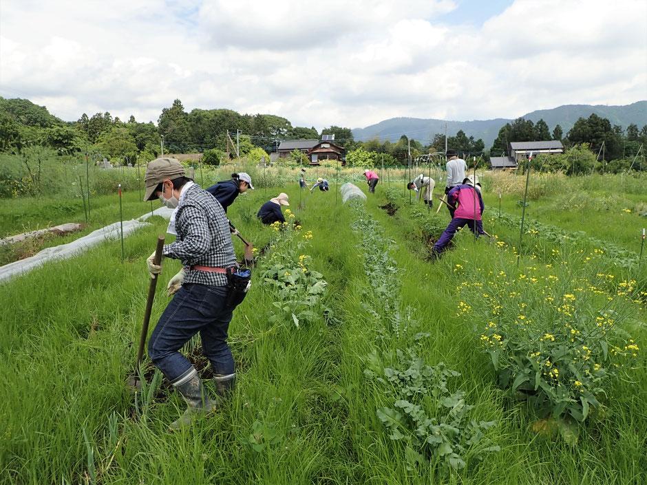 差農業体験神奈川 体験農園神奈川