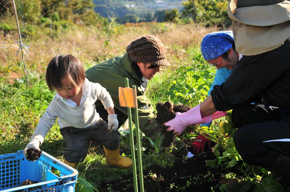首都圏で農業体験と自然栽培の野菜づくりができる「さとやま農学校」