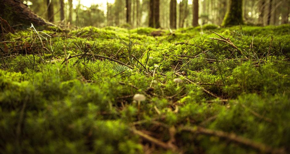 Moos im Wald, Waldoase, Ruhe, Entspannung, Entschleunigung, Erholung, Stille in der Natur, Waldbaden