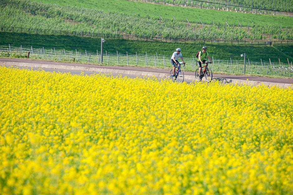 cycle-trips-japan-hokkaido
