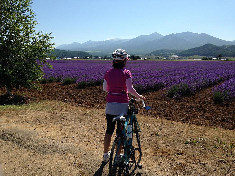 bike-tours-japan-hokkaido-lavender