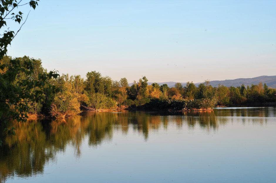 Pierre Rigou, réserve naturelle régionale, réserve ornithologique, étangs, Saix, Cambounet-sur-le-Sor, oiseaux, LPO Tarn, que faire à Puylaurens, que faire à Dourgne
