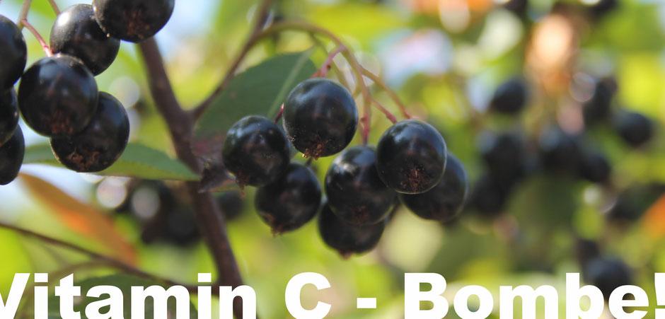 Aronia Apfelbeere - Vitamin C Bombe