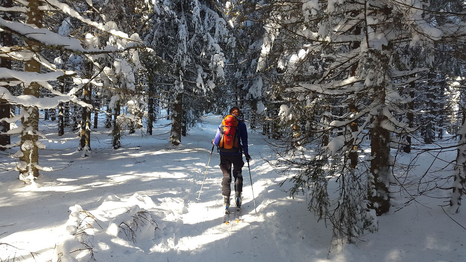 Langlauf in Winterberg