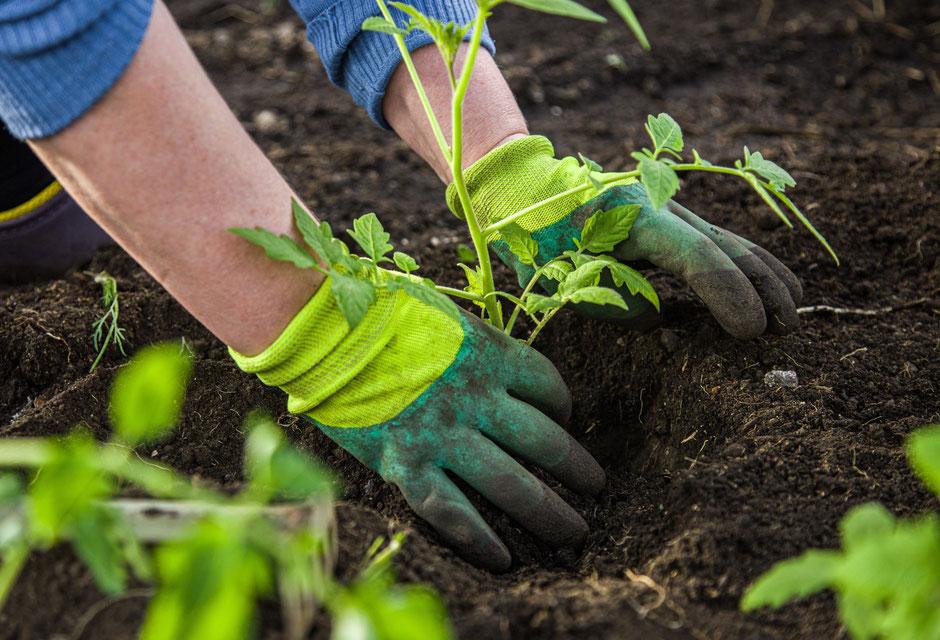 Garten Eden - Blumenerde, Pflanzerde - torffrrei, universal