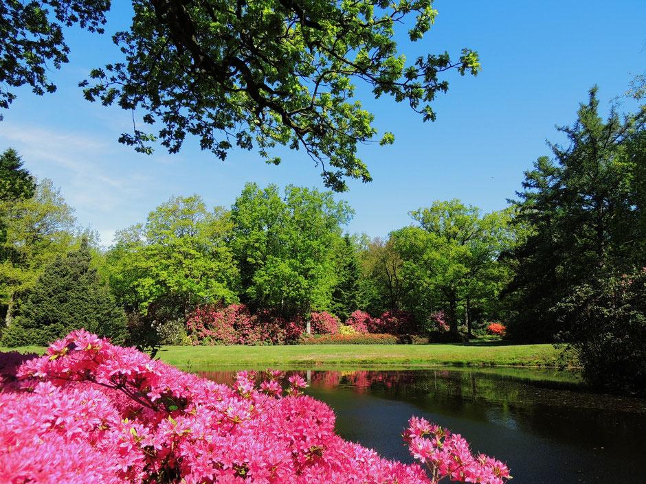 Schlosspark Lütetsburg wildes Ostfriesland Sabine Rümenap