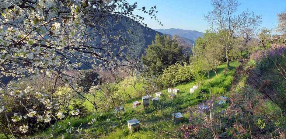 Le rucher et le jardin près du gite du gite