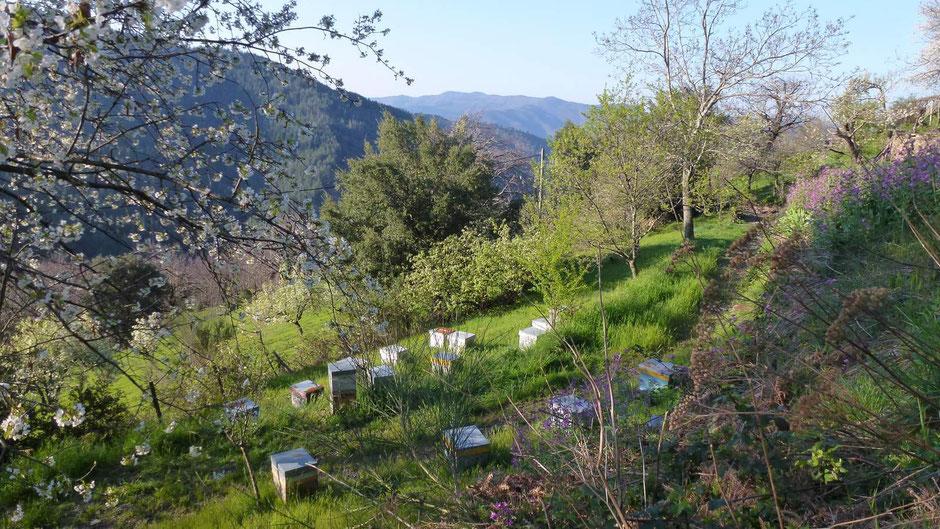 Les ruchers de Bastien