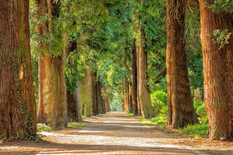 Wenn wir bereit sind zu unseren altbewährten Lebenswegen auch mal neue Wege zu gehen, oder alte auch zu verändern, ist es uns eher möglich unsere Potentiale zu leben.