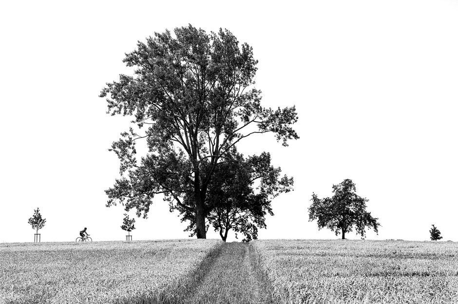 schwarz-weiß, Insel Poel, Kornfeld, Baum, Mountenbike