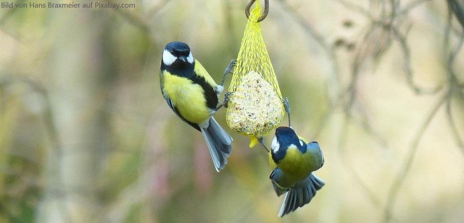 Meisenknödel Vögel im Sommer und Winter füttern