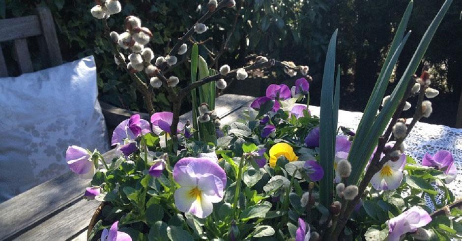 Impressionen aus meinem Garten