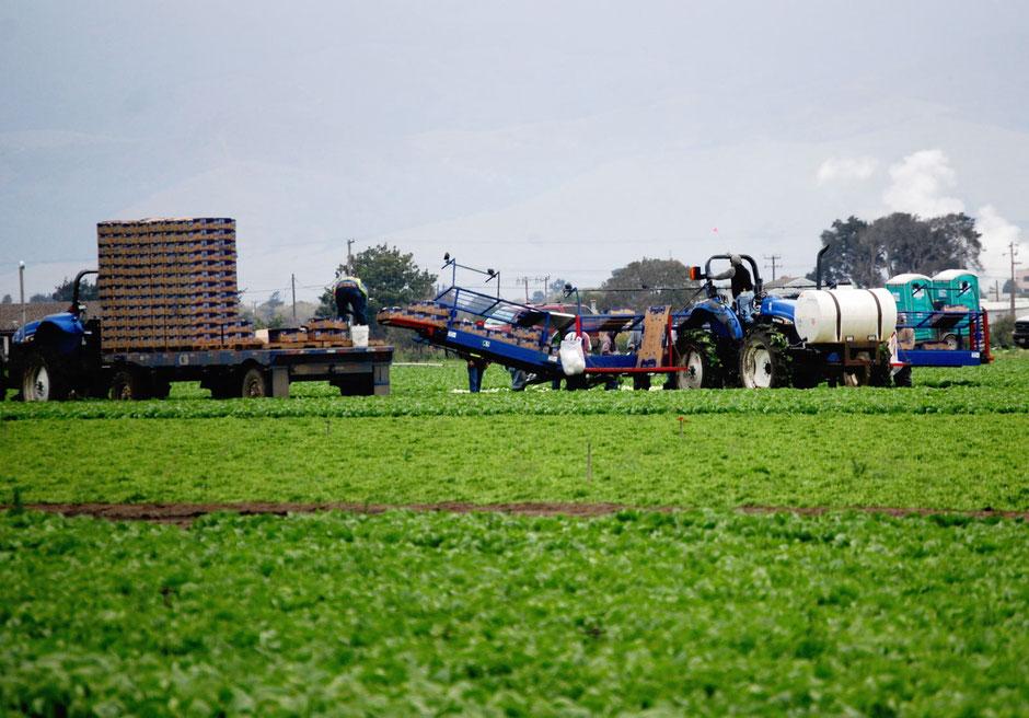 野菜畑に暗渠 暗きょ資材 水はけ 暗きょが効く 湿害 透水性改善 土づくり 良い土壌 土壌改善 土地改良資材 格安暗きょパイプ