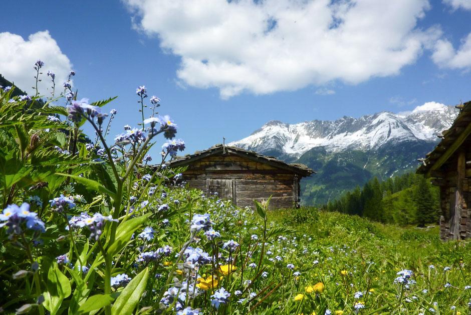 Berghütte in Tirol Mayerhofen zu vermieten/ pachten