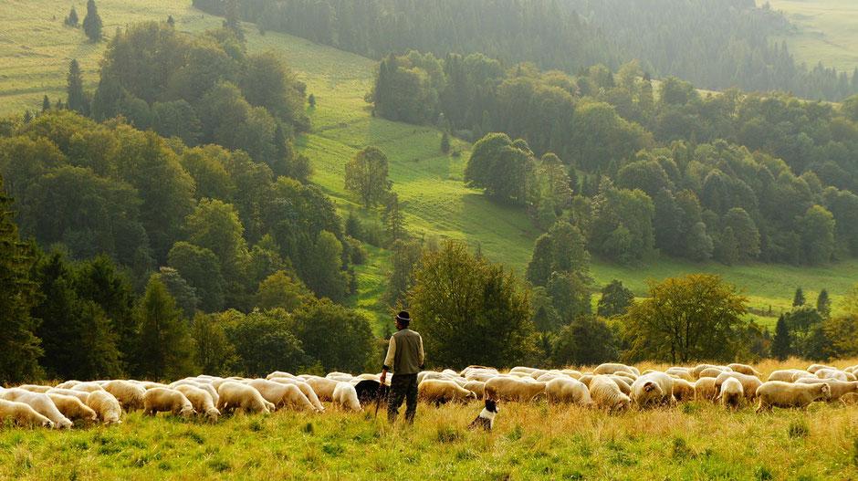 ラム オーストラリア ニュージーランド ショルダー チャックロール 輸入  M&Y株式会社 羊肉卷 マトン