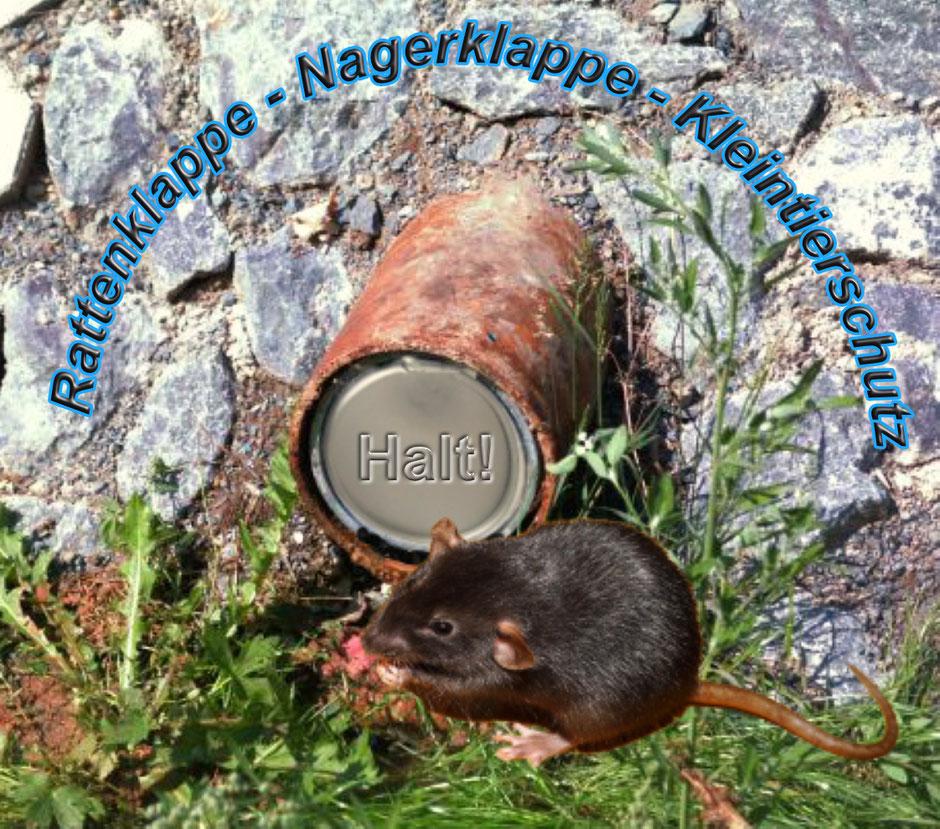 Unsere Kanäle vor Ratten schützen!